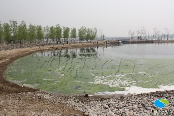 邦源环保园林景观水处理前,水绵爆发
