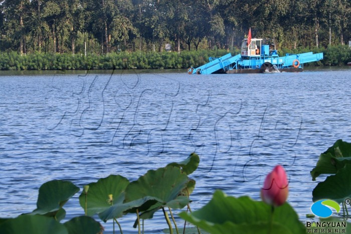 邦源环保景观水生物治理项目效果图