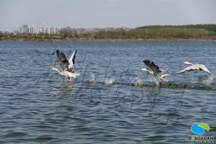 唐山南湖公园景观水生物治理效果图
